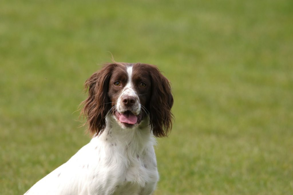 dogs breeds that are smart