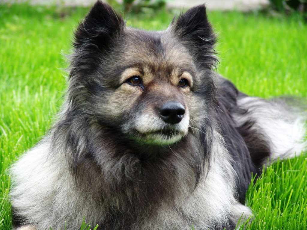 Dog breeds that are the smartest
