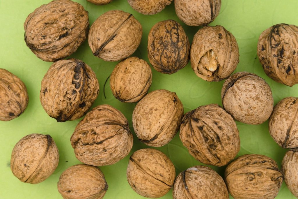 Are Walnuts Bad for Dogs