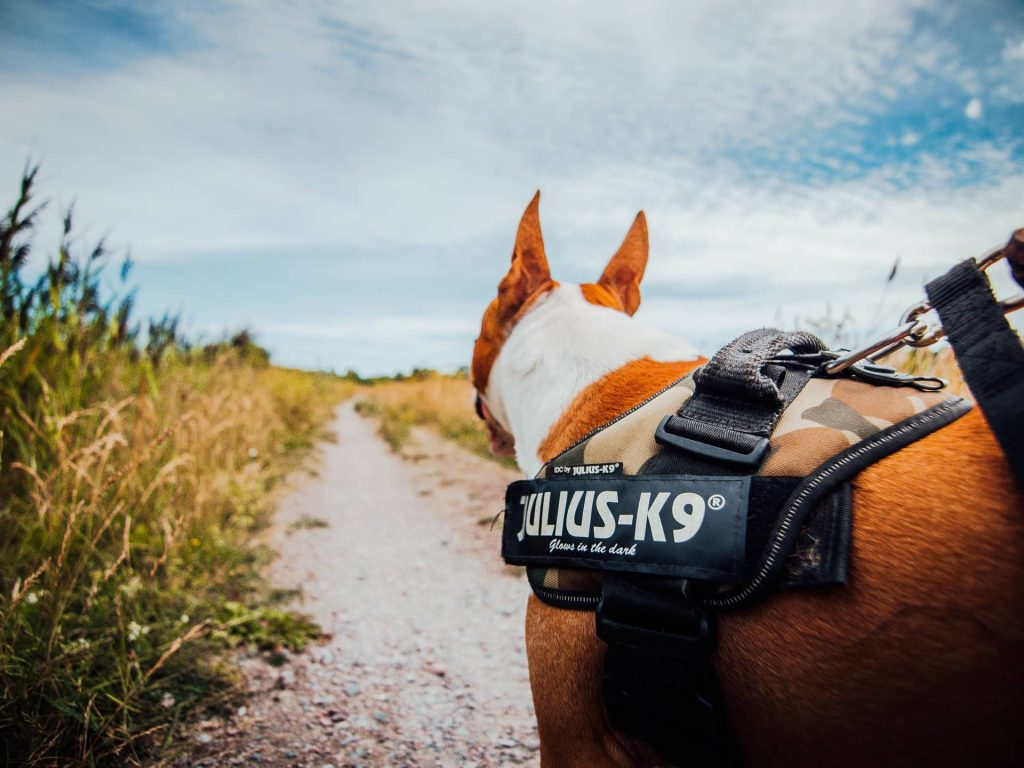 best small dog harness review