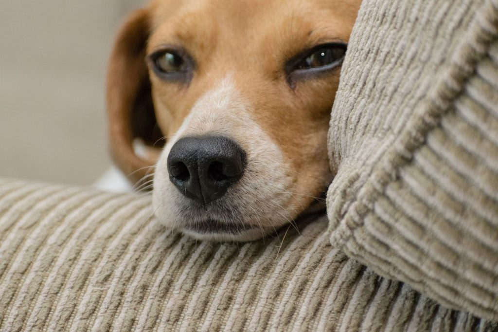 why pecans are not good for your dog