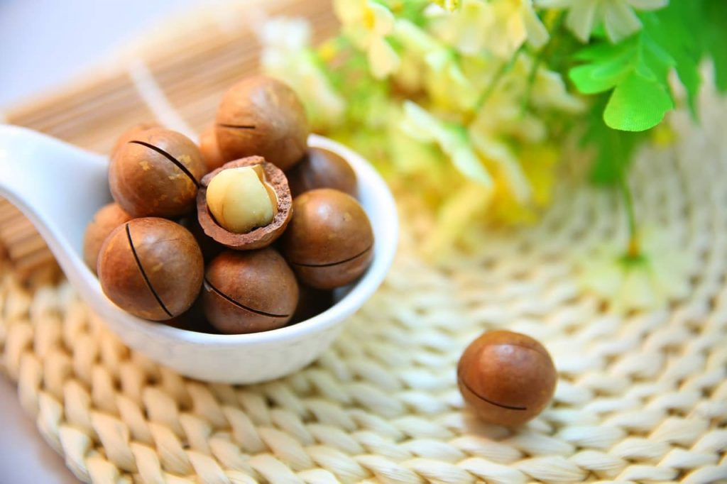 can dogs have macadamia nuts