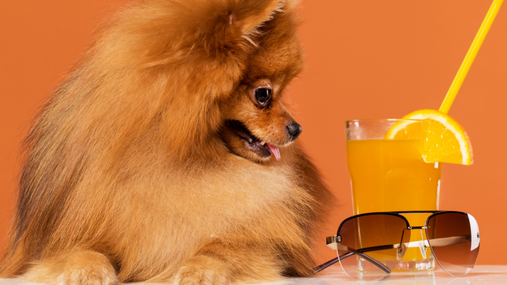 Can Dogs have Orange Juice