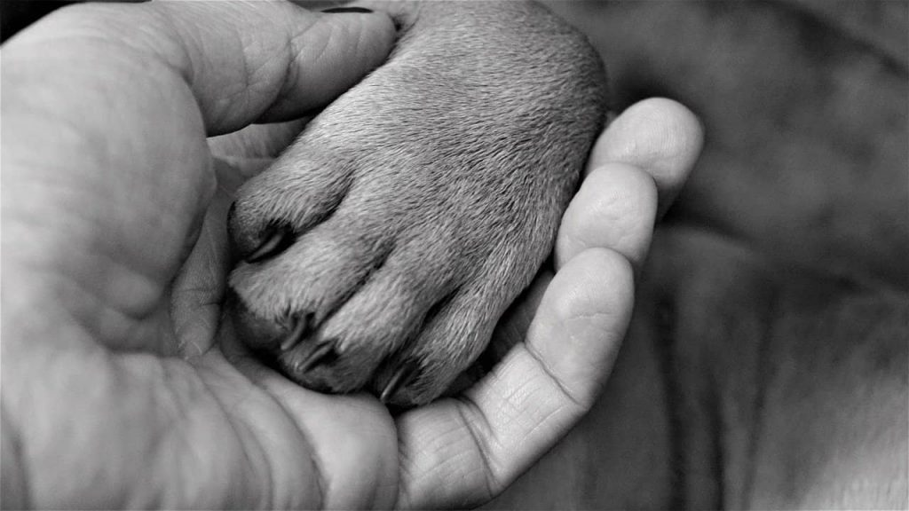 Caring for dog paws in winter