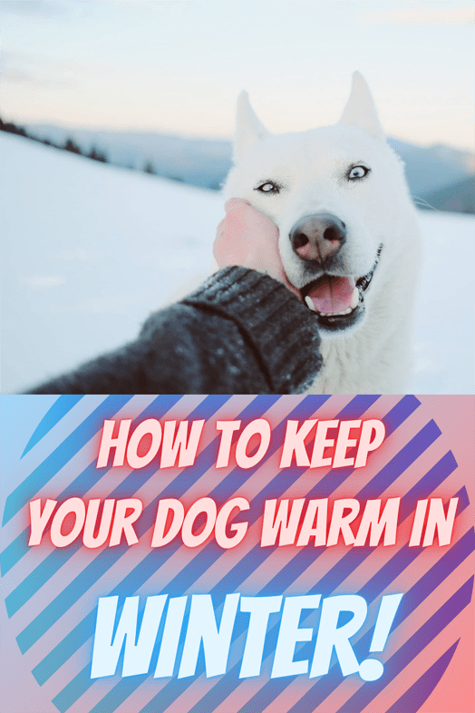 how to keep your dog warm